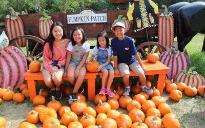 Mrs Heather Pumpkin Patch